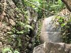 Após morte de macaco por febre amarela, Vitória fecha 11 parques