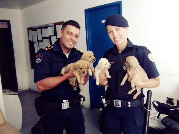 Cães são salvos pela Guarda Municipal após caírem em bueiro em Itajubá (Foto: Guada Municipal de Itajubá)