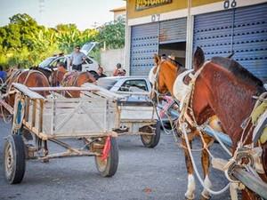 Lei que proíbe circulação de carroças nas ruas é aprovado em Taubaté (Foto: Divulgação/Câmara de Taubaté)