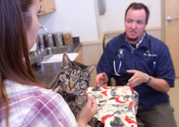 Gato sobreviveu a uma viagem de 64 dias no interior de sofá-cama (Foto: Eric Engman/Fairbanks Daily News-Miner/AP)