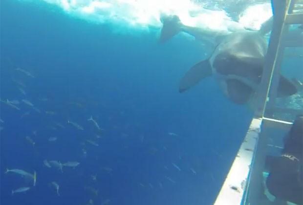 Cena ocorreu em mergulho em gaiola de proteção em Guadalupe (Foto: Reprodução/YouTube/Tom Mellinger)