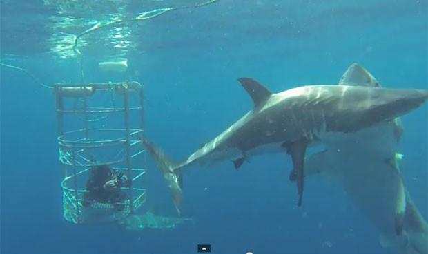 Russell Gordon registrou tubarão branco atacando animal da mesma espécie embaixo d'água (Foto: Reprodução/YouTube/Russell Gordon)