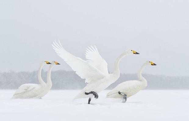 Menção honrosa da categoria Melhor Imagem - Natureza: Terra, Ar, Fogo e   Água (NÃO USAR) (Foto: Marsel van Oosten/www.tpoty.com)