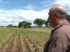 Falta de chuva regular preocupa produtores de soja do sul de MS