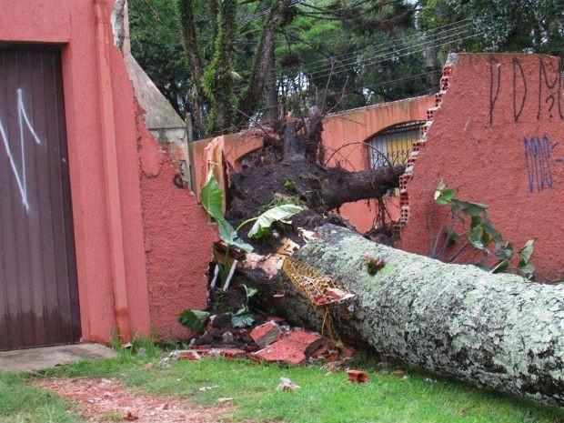 Chuva em Curitiba derrubou várias árvores  (Foto: Jéssica Haluch )