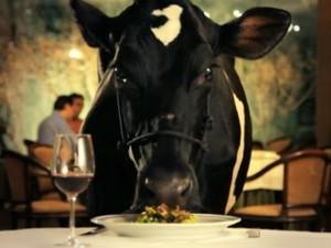 Animal Poltico (Foto: divulgao)