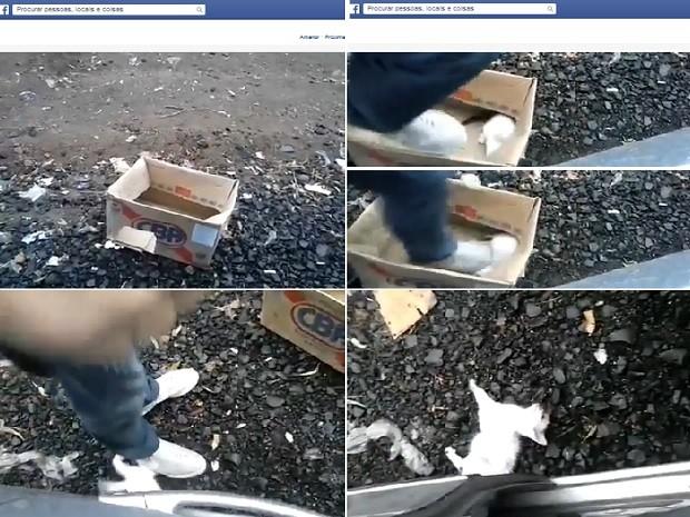Sequência de imagens mostram homem pisando na cabeça do gato até matá-lo (Foto: Reprodução / Facebook)