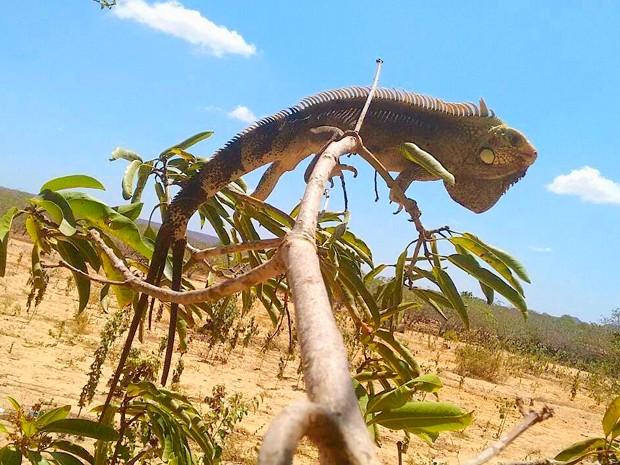 Animal foi achado no município de Lagoa Nova na tarde desta terça-feira (27) (Foto: Bárbara Azevedo/G1)