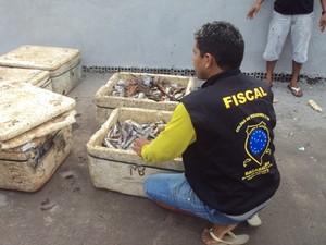 Trezentos quilos de peixes foram apreendidos durante fiscalização (Foto: Divulgação/SSP MA)