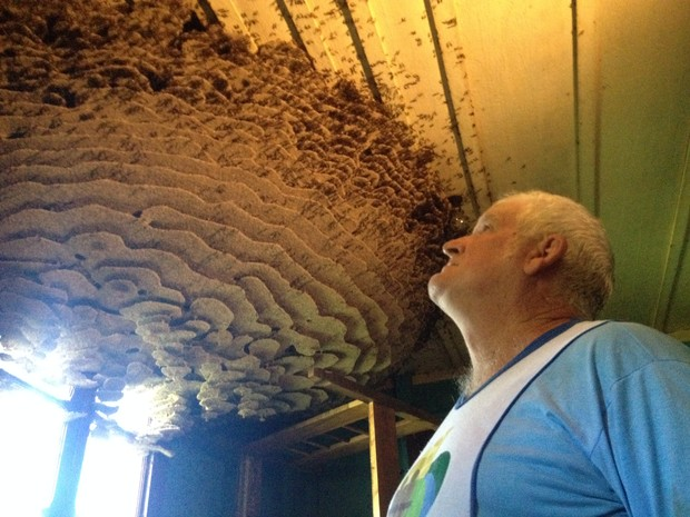 Aposentado pretende deixar ninho de vespas em casa (Foto: Eduardo Cristófoli/RBS TV)
