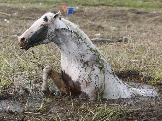Um cavalo tenta se libertar de um atoleiro em Ironton, Louisiana, após passagem da tormenta. (Foto: John Bazemore / AP Photo)