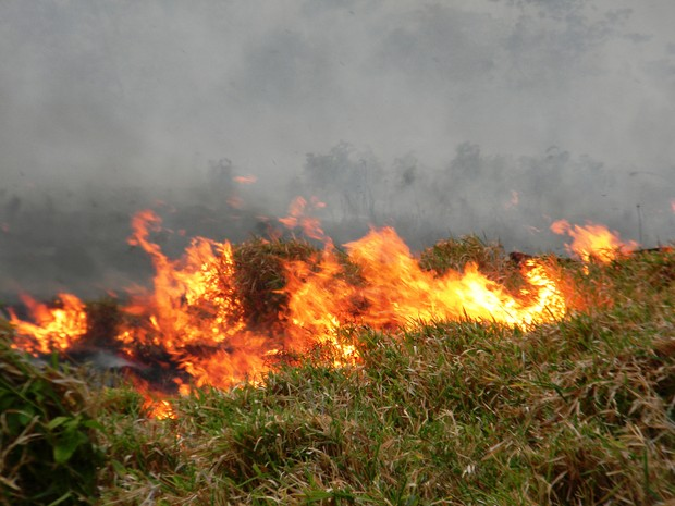 Fogo se alastra pelo lavrado de Roraima (Foto: Roque Neto/TV Roraima)