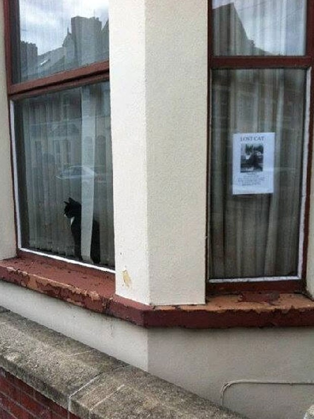 Gato observa pela janela ao lado de cartaz que diz que ele está perdido (Foto: Reprodução/Imgur/LunarCandy)