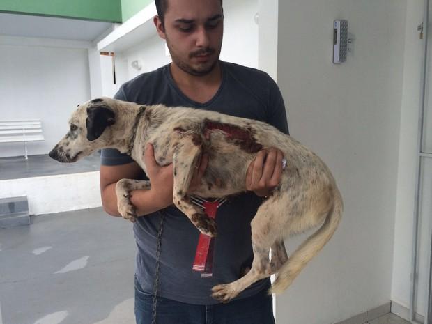 Cadela cão queimado ong costelinha amapá macapá (Foto: Abinoan Santiago/G1)