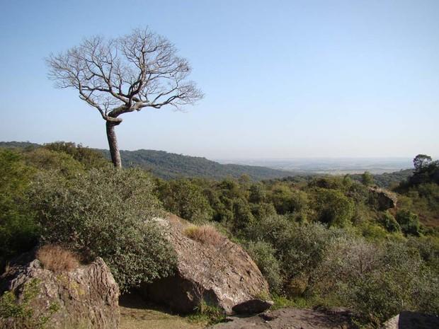 Flona de Ipanema é área de conservação federal desde 1992 (Foto: ICM Bio/Divulgação)