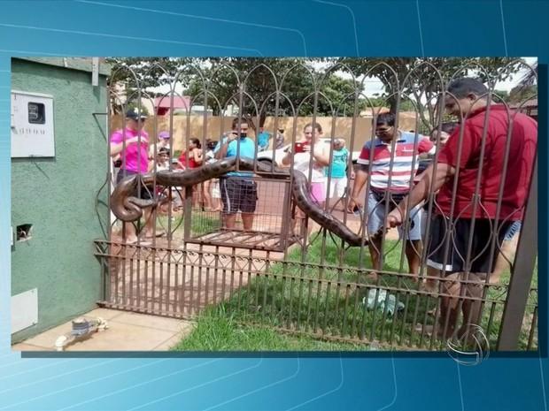 Morador encontra cobra em casa em Maracaju (MS) (Foto: Reprodução/TV Morena)