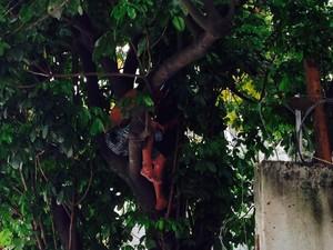 Índio subiu em árvore e bombeiros foram chamados para retira-lo (Foto: Janaína Ferreira/G1)