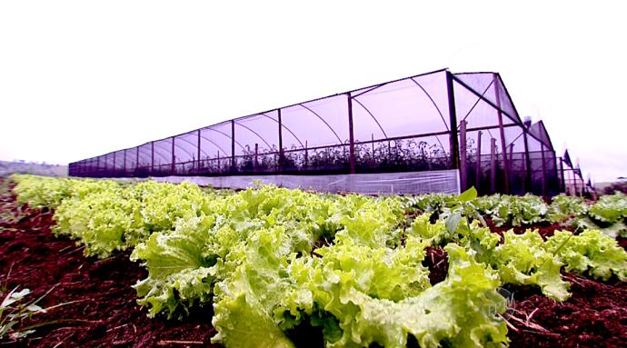 Na fazenda do David Ralitera, os produtos são orgânicos e muitos são plantas esquecidas (Foto: reprodução EPTV)