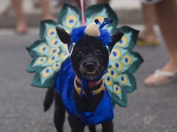 Donos capricharam no visual dos cães (Foto: Silvia Izquierdo/AP)