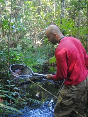 Quatro das 6 espécies mais presentes nos riachos diminuíram entre 44% e 57% nas áreas agrícolas (Foto: Paulo Ricardo Ilha Jiquiriçá/ Arquivo pessoal)