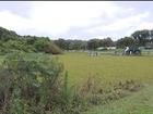 Plantas aquáticas confundem lago com gramado em parque de Curitiba