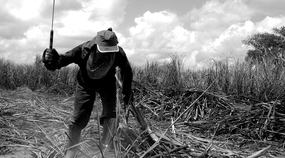 Canavial; cana de acucar; trabalhador rural (Foto: Flickr)