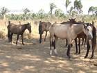 'Aids equina' preocupa criadores de cavalos e é destaque do Mirante Rural