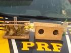 PRF apreende pássaros silvestres e prende suspeito no interior de AL