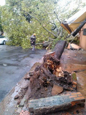 Árvore caiu e bloqueou pista em Moema (Foto: Fábio Tito/G1)