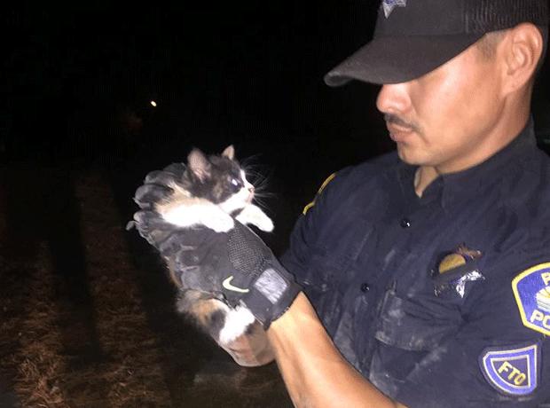 O gato Burrito apos o resgate (Foto: Parlier Police Department/Facebook)