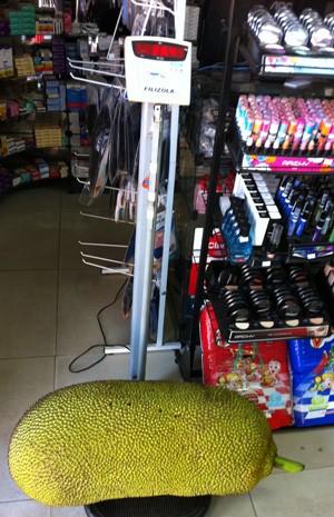 Nesta segunda-feira (29) a jaca foi pesada na balança de uma farmácia, na Vila Planalto (Foto: Káthia Mello/G1)