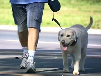 Resultado de imagem para passear com cachorro labrador df