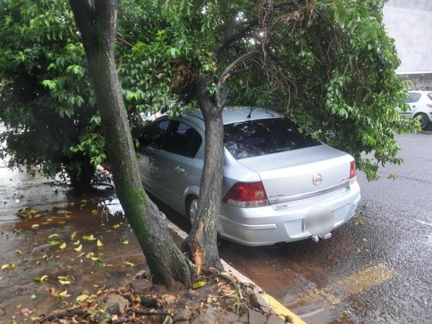 Veículo ficou danificado com queda de árvore (Foto: Graziela Rezende/G1 MS)