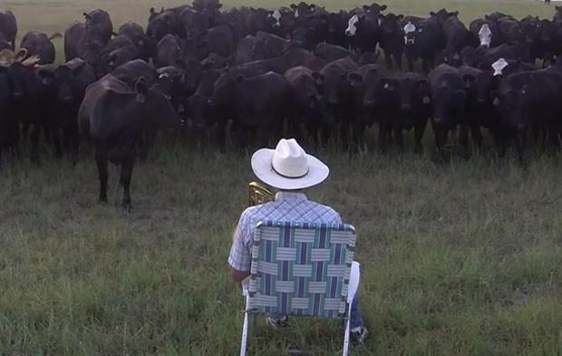Derek Klingenberg virou hit na web ao fazer 'serenata' para rebanho de vacas com seu trombone (Foto: Reprodução/YouTube/Farmer Derek Klingenberg)