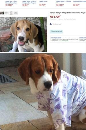 Homem fez comparação entre página que estaria vendendo cachorro retirado do instituto e o animal que estava em sua casa. (Foto: Arquivo Pessoal)
