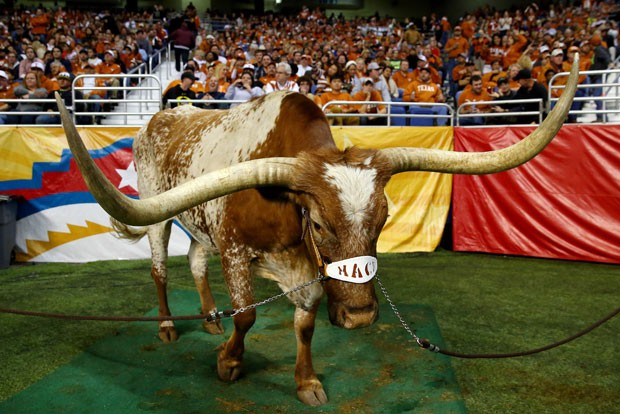 Bevo é mascote da equipe de futebol americano Texas Longhorns (Foto: Ronald Martinez/Getty Images/AFP )