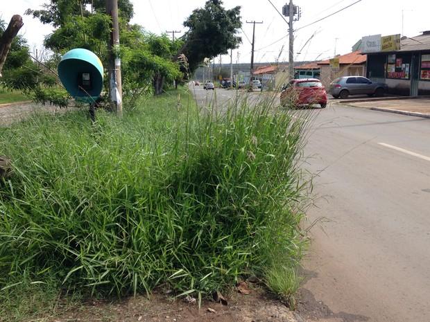 Grama alta atrapalha acesso a telefone público, na QNM 42, em Taguatinga Norte (Foto: Natalia Godoy/G1)