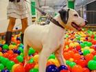 Evento tem piscina de bolinhas para pets em Salvador; veja serviços