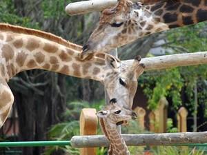 Zoo é uma das atrações e possui mais de 1000 animais (Foto: Beto Carrero World/Divulgação)