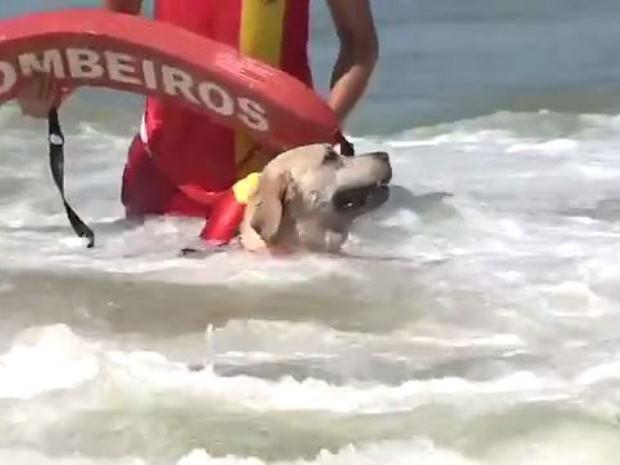 Cão leva boia até vítima de afogamento (Foto: Reprodução/RBS TV)