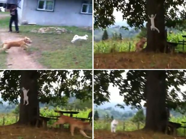 Gato subiu ligeiramente em árvore e despistou seu perseguidor (Foto: Reprodução)