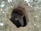 Ovelha é resgatada ao ser encontrada entalada em buraco na Inglaterra