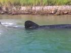 Aparição de espécie rara de tubarão encanta moradora: 'Foi fantástico!'