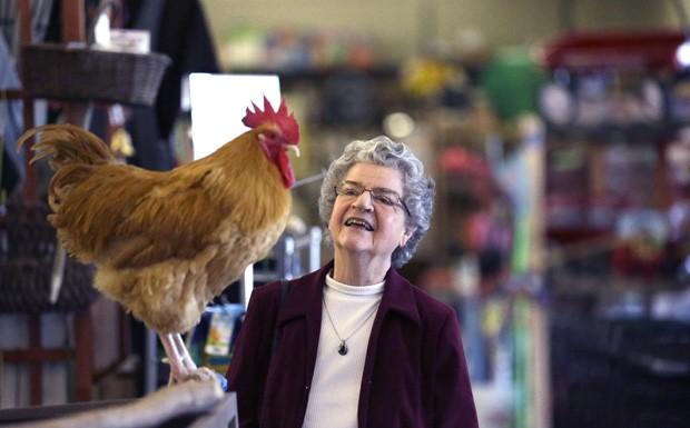 Galo 'Príncipe George' faz sucesso com clientes em loja de jardinagem nos EUA (Foto: LM Otero/AP)
