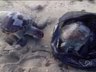 Tartarugas são encontradas mortas dentro de sacola em praia de Vitória