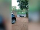 Tamanduá-bandeira passeia em quintal de casa em MS; veja vídeo