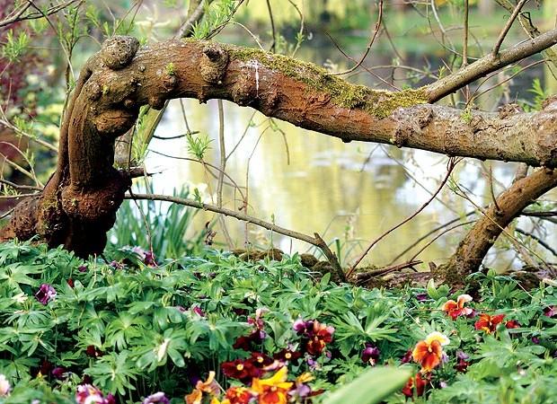 Abaixo, a raiz do chorão fica à mostra junto ao lago, dando sustentação à planta. No chão, violetas multicoloridas formam um animado tapete (Foto: Fernando Grilli)