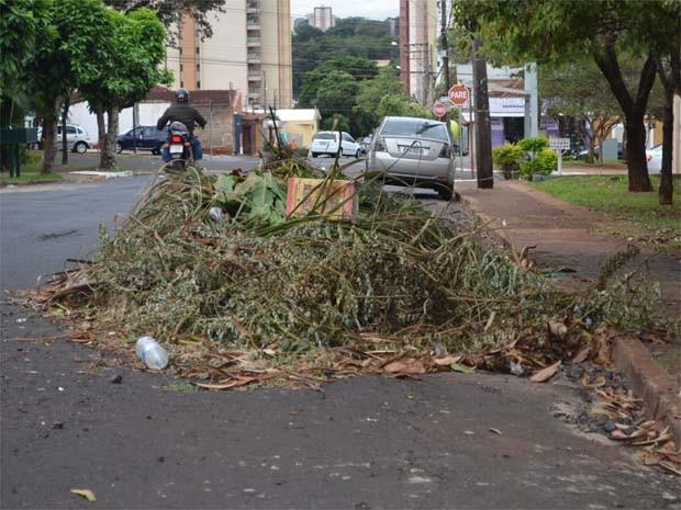 Galhos de coqueiro se acumulam pela Rua Heitor Chiarello, em Ribeirão. (Foto: Fernanda Testa/G1)