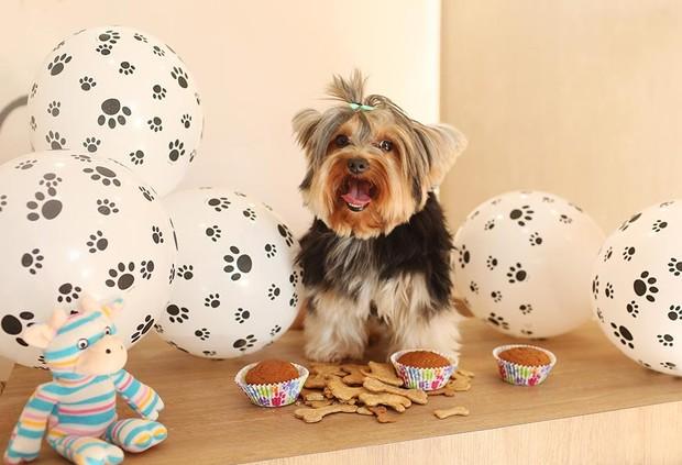 Mike, cachorrinho de Geisy Arruda (Foto: Iwi Onodera / EGO)