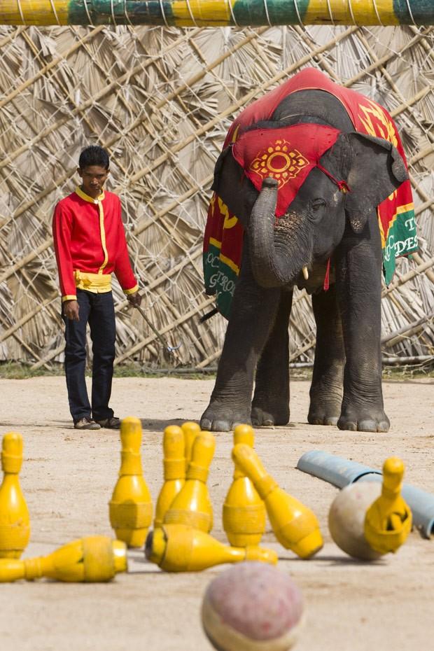 Elefante joga boliche na cidade de Pattaya, na Tailândia, em 2011. (Foto: Bronek Kaminski/Barcroft Media/Getty Images)